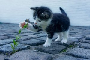 Webburo Spring: Houd je afbeeldingen zo klein mogelijk