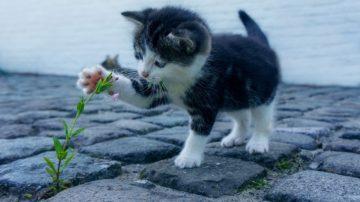 Tips en advies van  Webburo Spring: Houd je afbeeldingen zo klein mogelijk